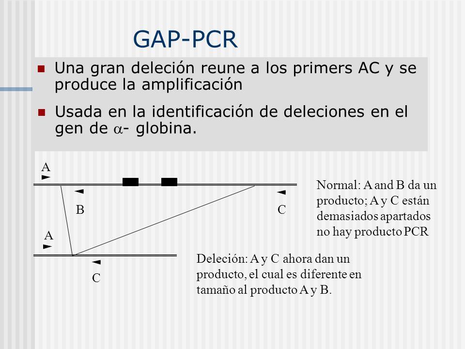 GAP-PCR Una gran deleción reune a los primers AC y se produce la amplificación. Usada en la identificación de deleciones en el gen de - globina.