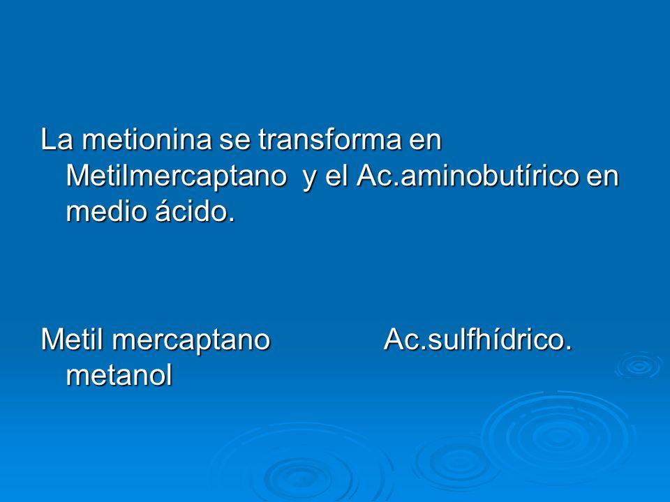 La metionina se transforma en Metilmercaptano y el Ac