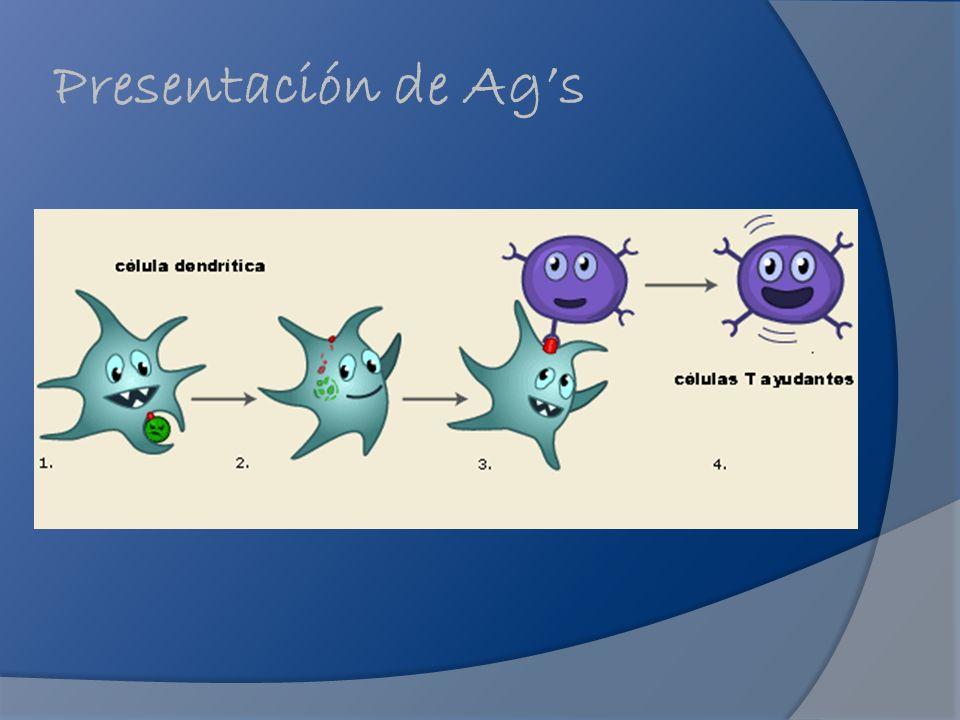 Presentación de Ag's