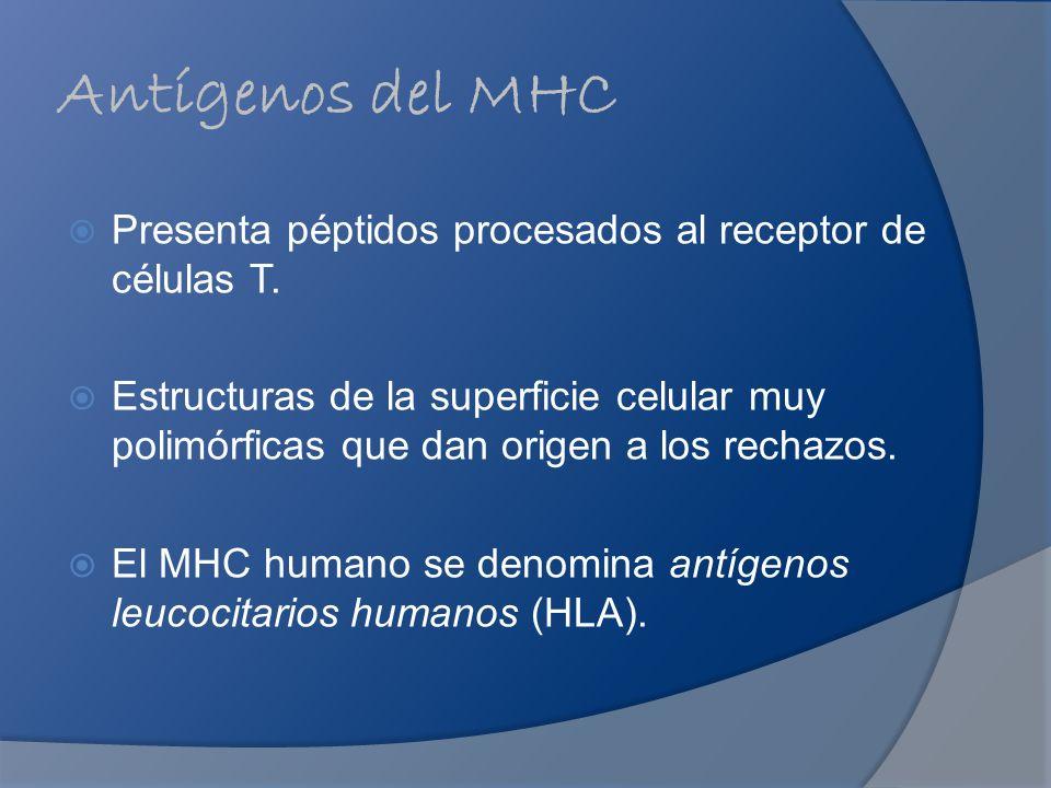 Antígenos del MHC Presenta péptidos procesados al receptor de células T.