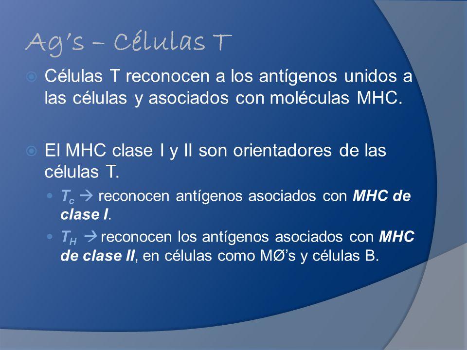 Ag's – Células T Células T reconocen a los antígenos unidos a las células y asociados con moléculas MHC.