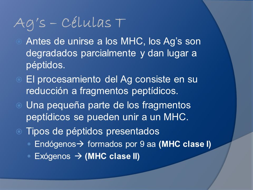 Ag's – Células T Antes de unirse a los MHC, los Ag's son degradados parcialmente y dan lugar a péptidos.