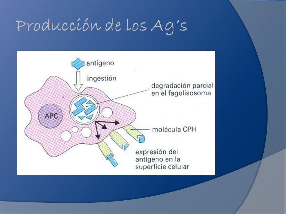 Producción de los Ag's