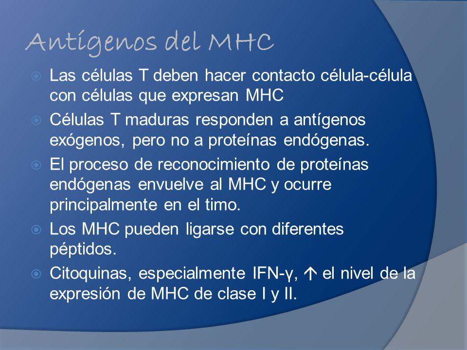 Antígenos del MHC Las células T deben hacer contacto célula-célula con células que expresan MHC.