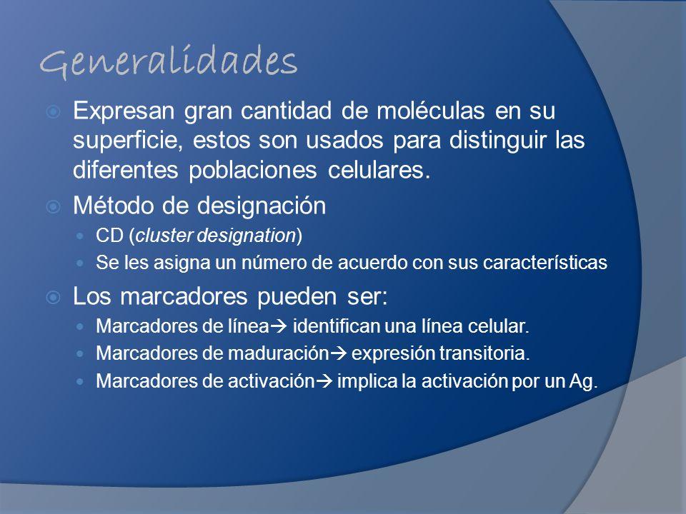 Generalidades Expresan gran cantidad de moléculas en su superficie, estos son usados para distinguir las diferentes poblaciones celulares.