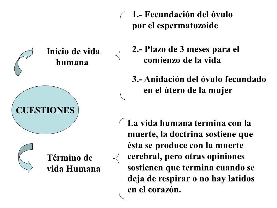 1.- Fecundación del óvulo por el espermatozoide