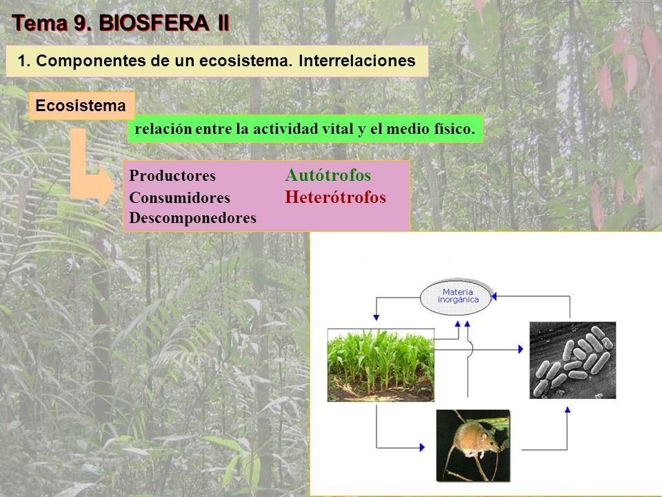 1. Componentes de un ecosistema. Interrelaciones