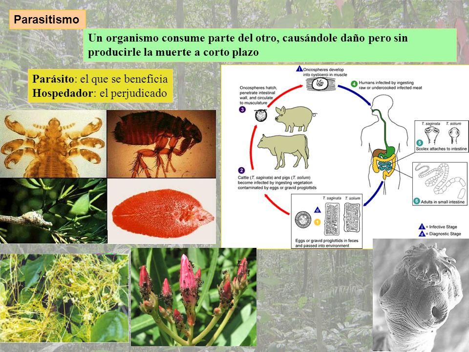 ParasitismoUn organismo consume parte del otro, causándole daño pero sin producirle la muerte a corto plazo.