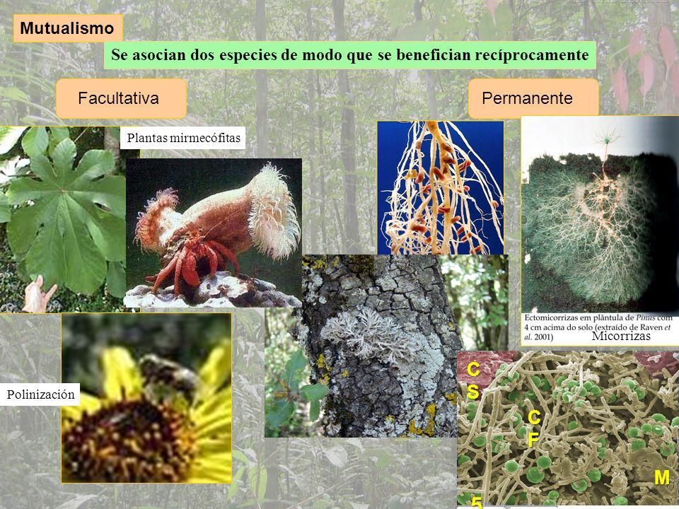 Mutualismo Se asocian dos especies de modo que se benefician recíprocamente. Facultativa. Permanente.
