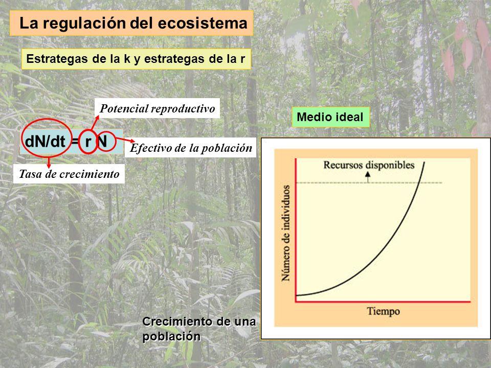 La regulación del ecosistema