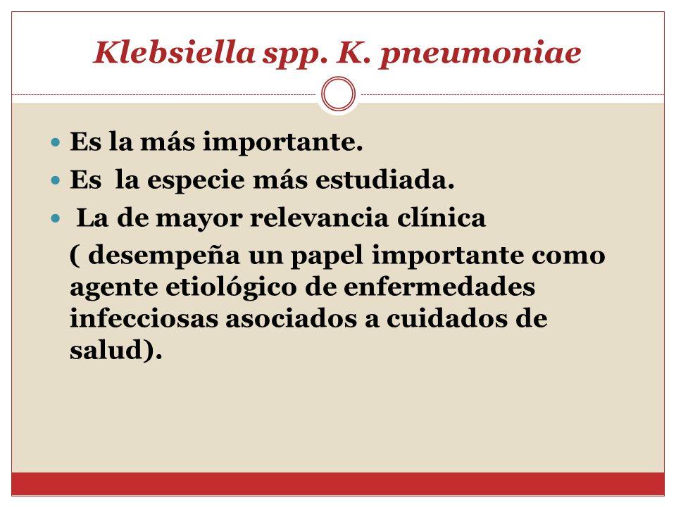 Klebsiella pneumoniae en la vagina