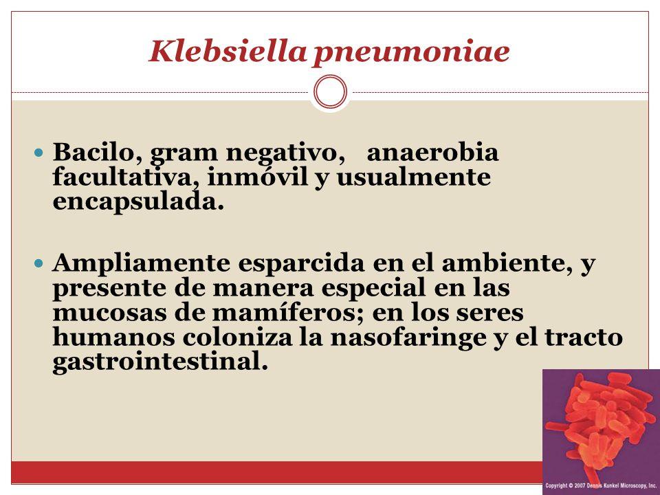 Klebsiella pneumoniae vaginal, alguien ha tenido esta