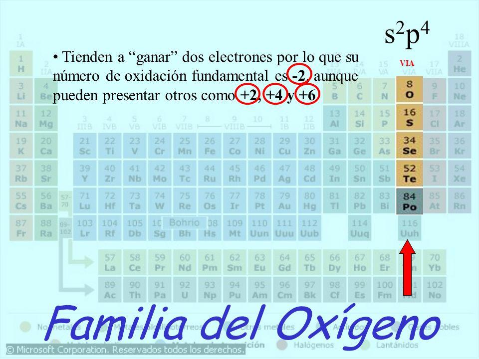s2p4 Tienden a ganar dos electrones por lo que su número de oxidación fundamental es -2, aunque pueden presentar otros como +2, +4 y +6.