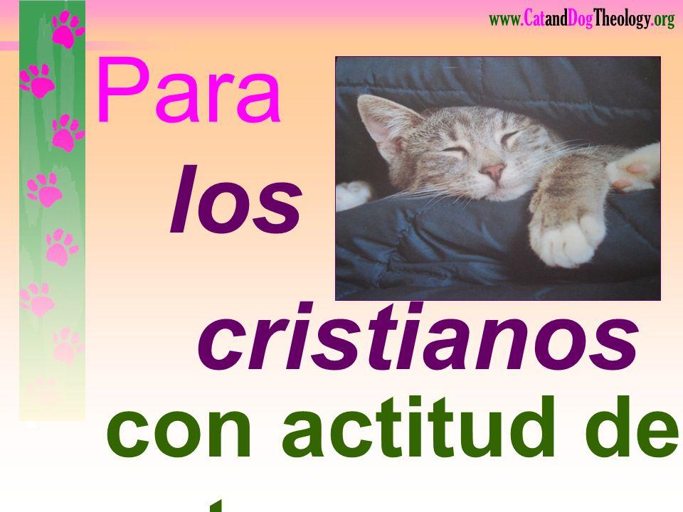 Para los cristianos Lea. con actitud de gato 106