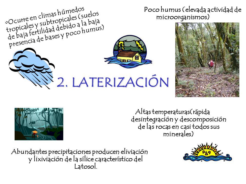 2. LATERIZACIÓN Poco humus (elevada actividad de microorganismos)