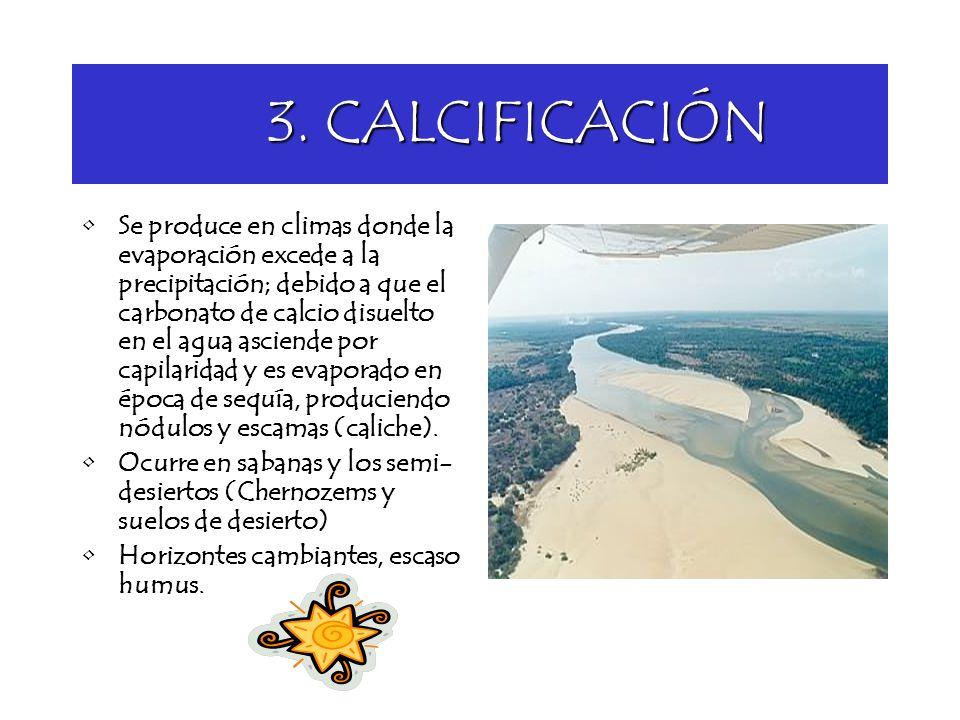 3. CALCIFICACIÓN