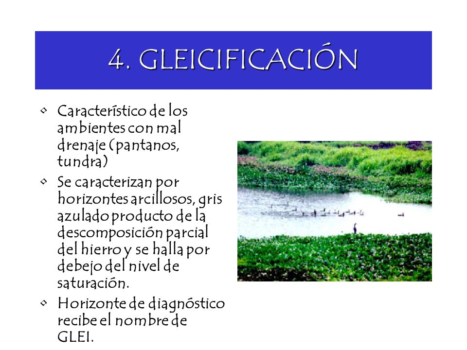 4. GLEICIFICACIÓN Característico de los ambientes con mal drenaje (pantanos, tundra)