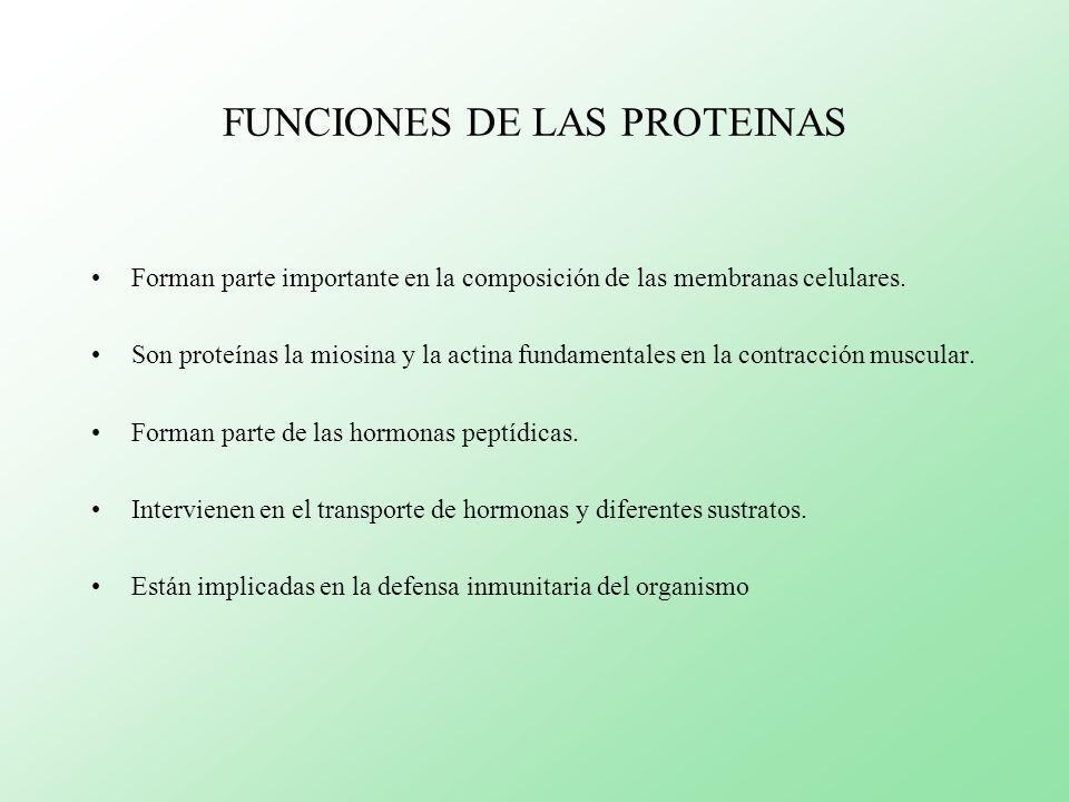 FUNCIONES DE LAS PROTEINAS