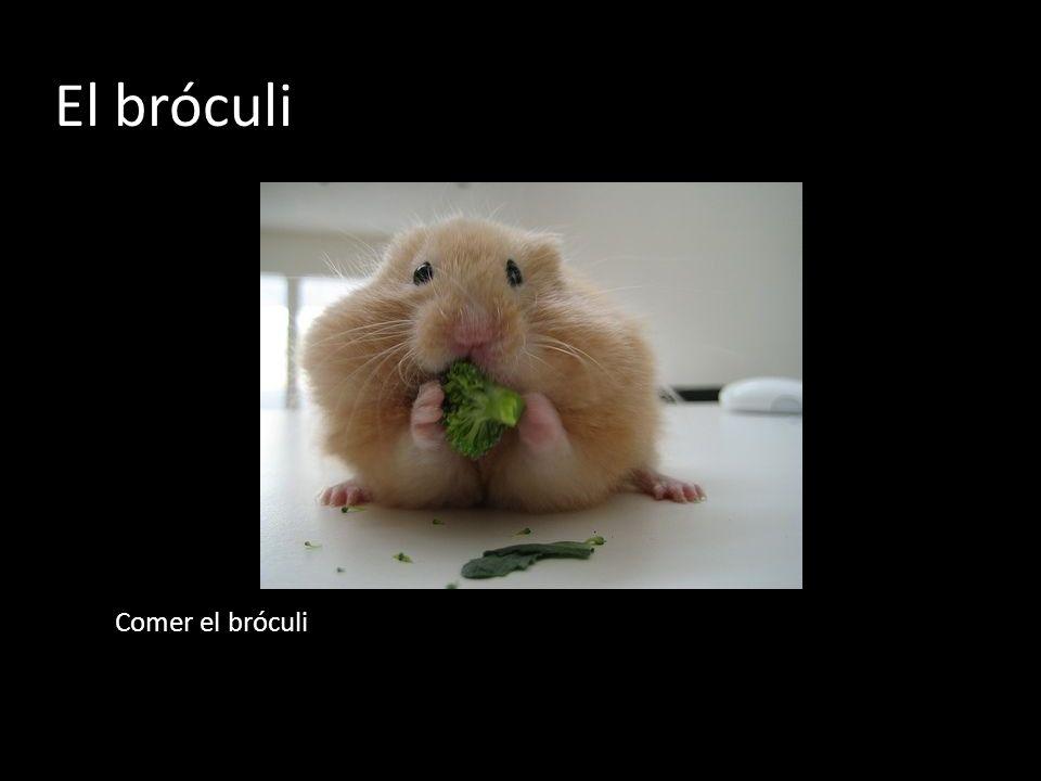El bróculi Comer el bróculi