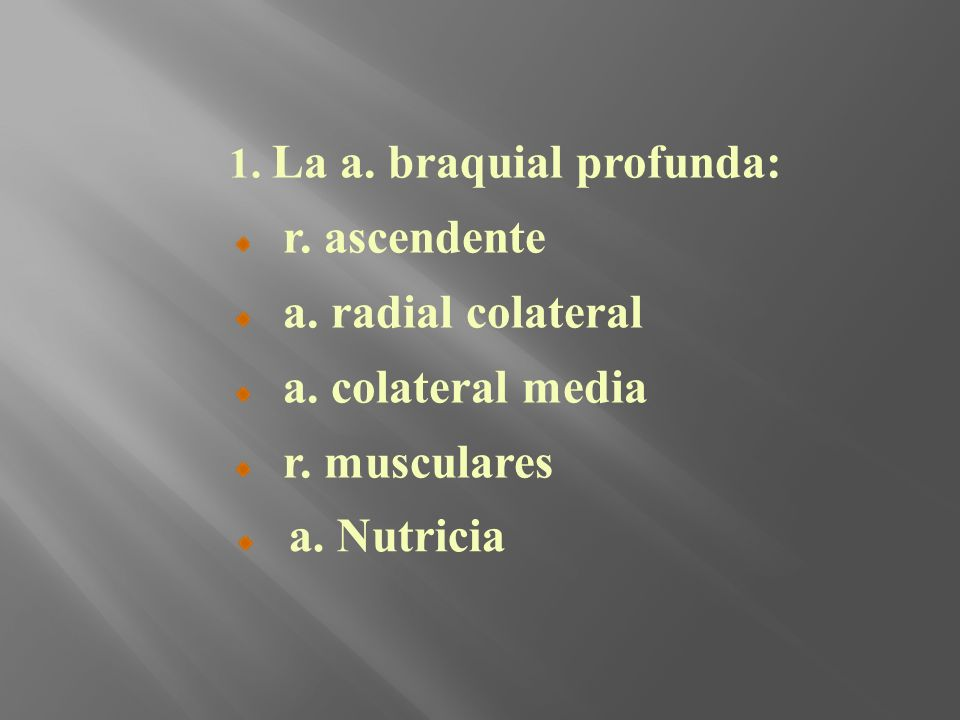 r. ascendente a. radial colateral a. colateral media r. musculares