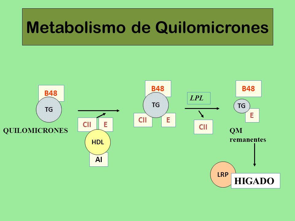 Metabolismo de Quilomicrones