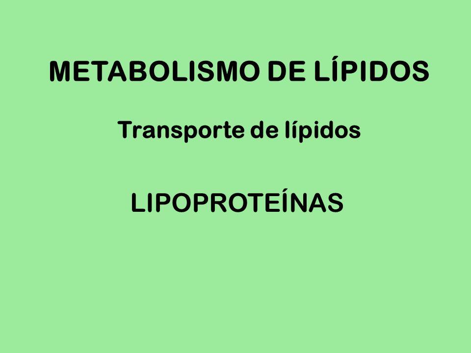 METABOLISMO DE LÍPIDOS Transporte de lípidos