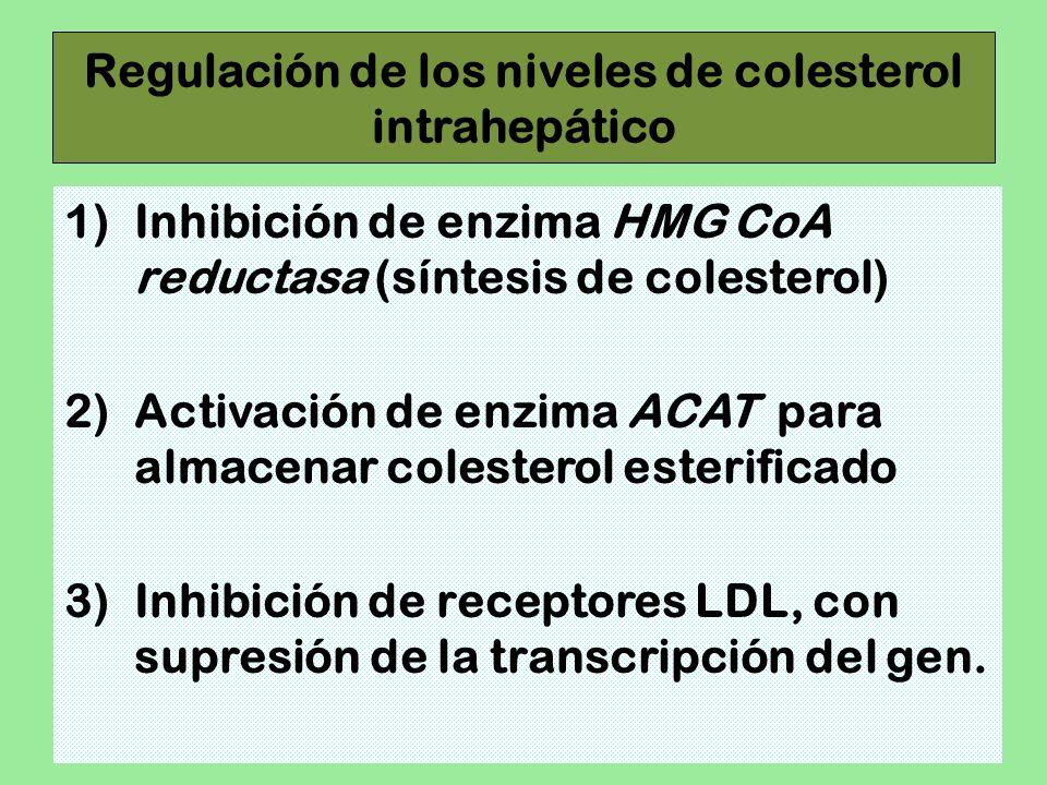 Regulación de los niveles de colesterol intrahepático
