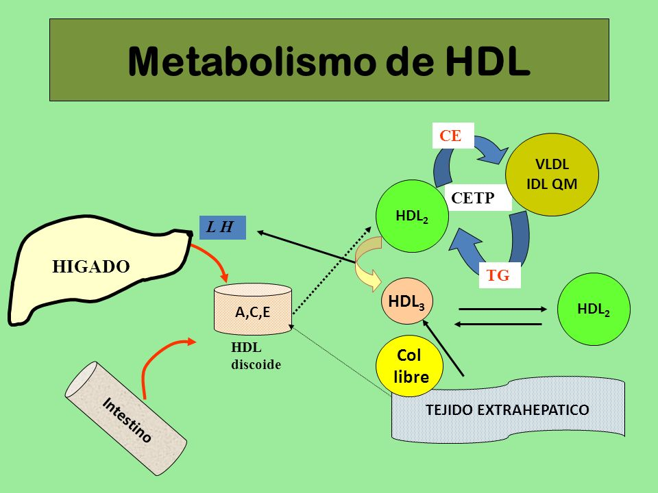 Metabolismo de HDL HIGADO HDL3 Col libre CE VLDL IDL QM CETP HDL2 L H
