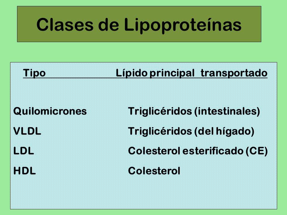 Clases de Lipoproteínas