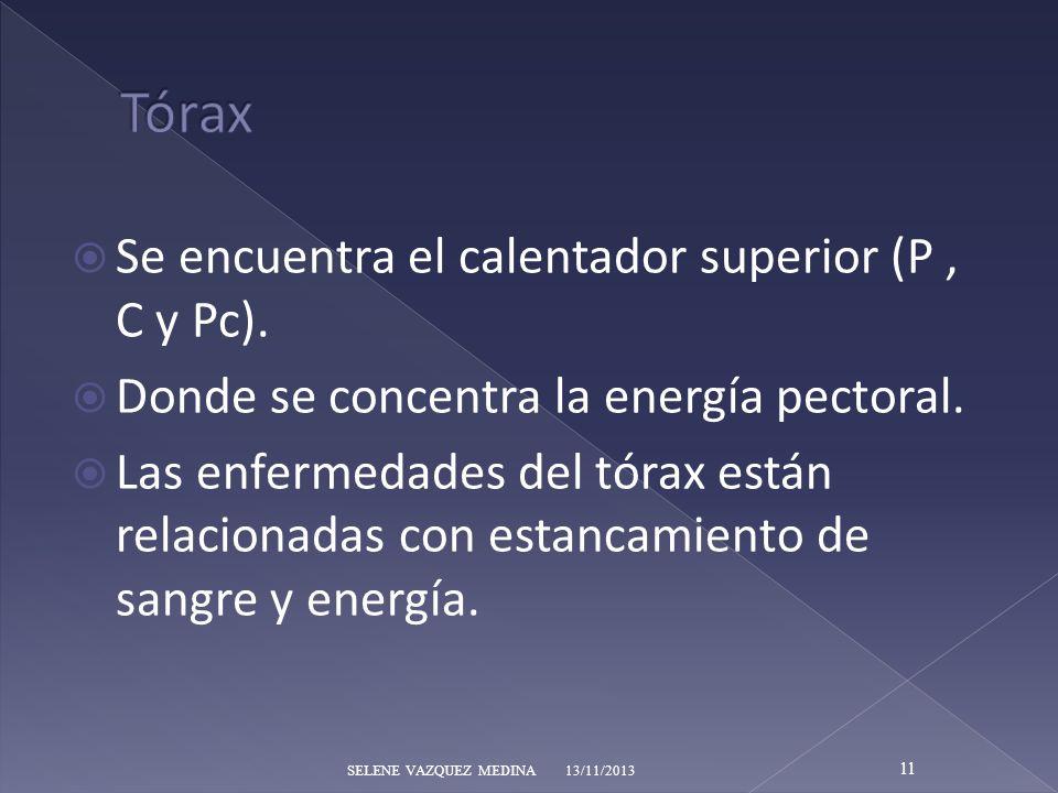 Tórax Se encuentra el calentador superior (P , C y Pc).