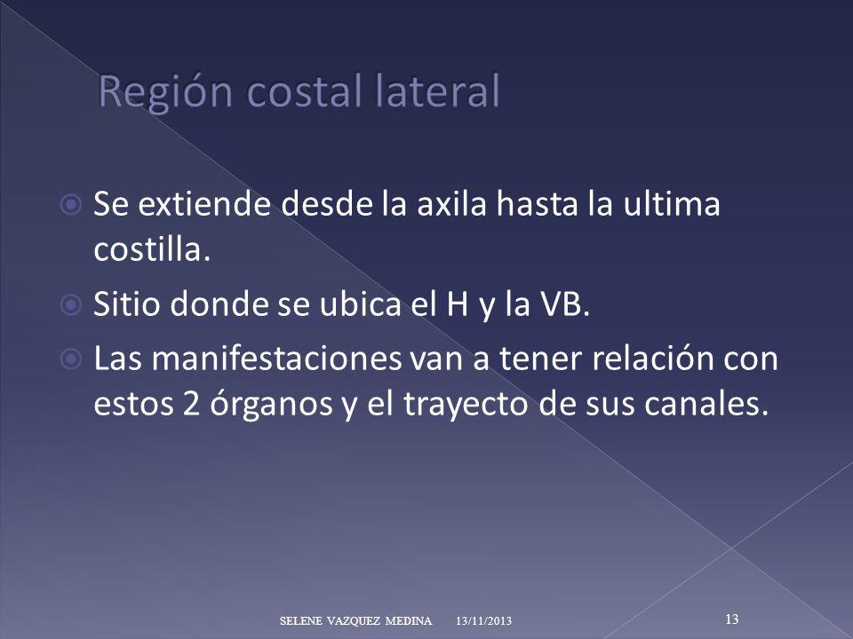 Región costal lateral Se extiende desde la axila hasta la ultima costilla. Sitio donde se ubica el H y la VB.
