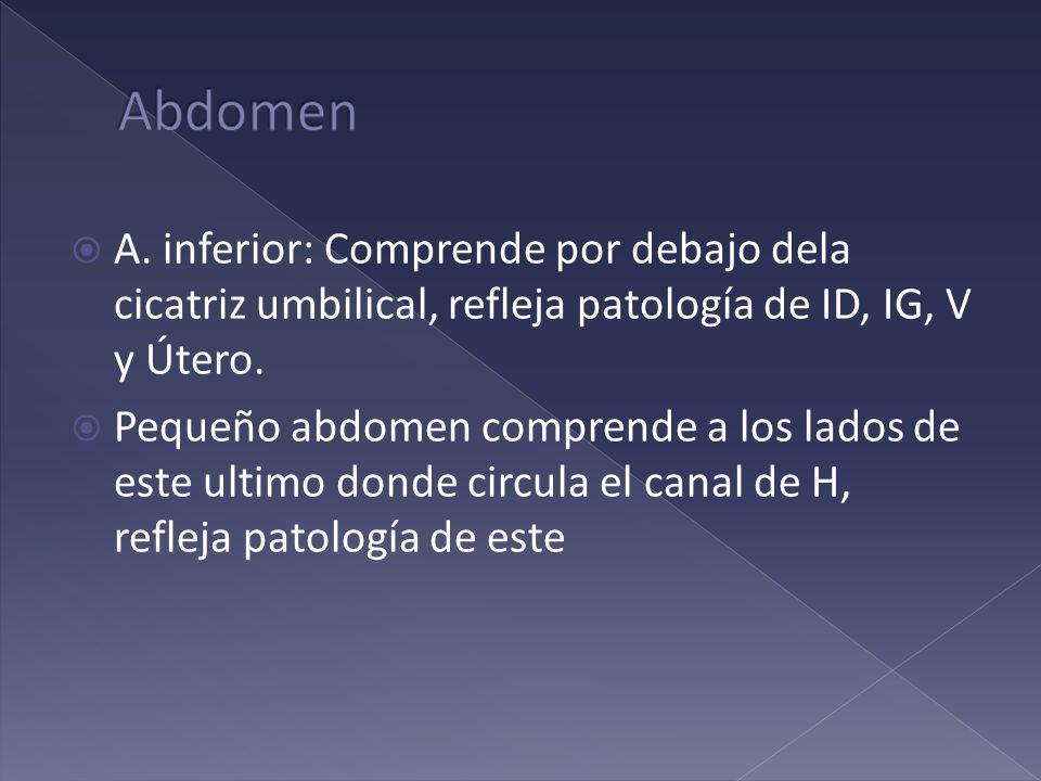 Abdomen A. inferior: Comprende por debajo dela cicatriz umbilical, refleja patología de ID, IG, V y Útero.