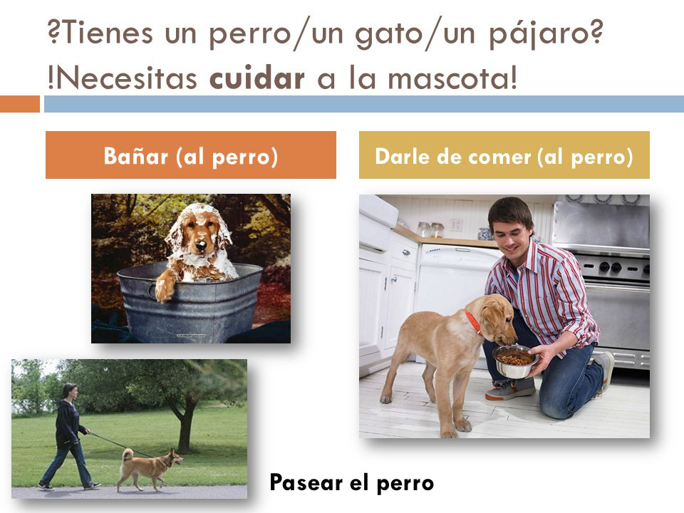 Tienes un perro/un gato/un pájaro !Necesitas cuidar a la mascota!
