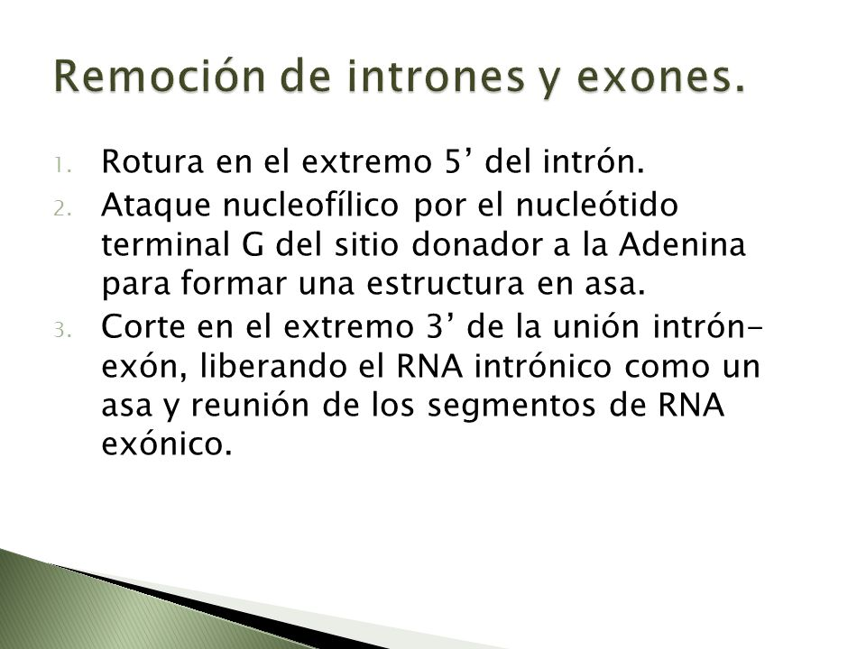 Remoción de intrones y exones.