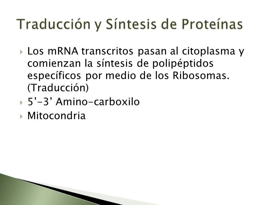 Traducción y Síntesis de Proteínas