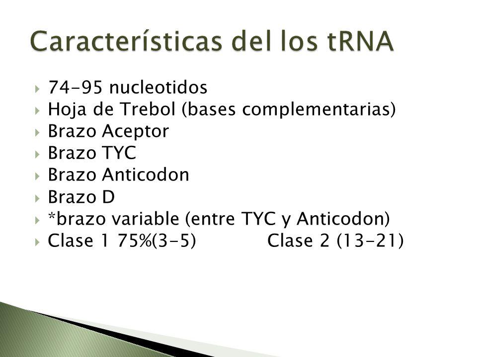Características del los tRNA