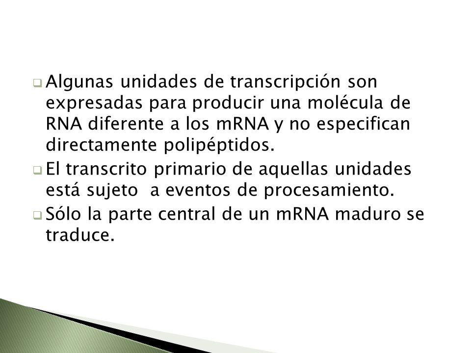Algunas unidades de transcripción son expresadas para producir una molécula de RNA diferente a los mRNA y no especifican directamente polipéptidos.