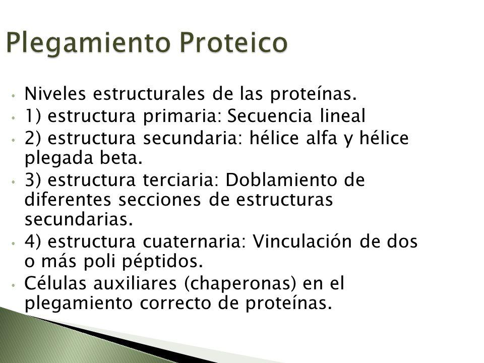 Plegamiento Proteico Niveles estructurales de las proteínas.