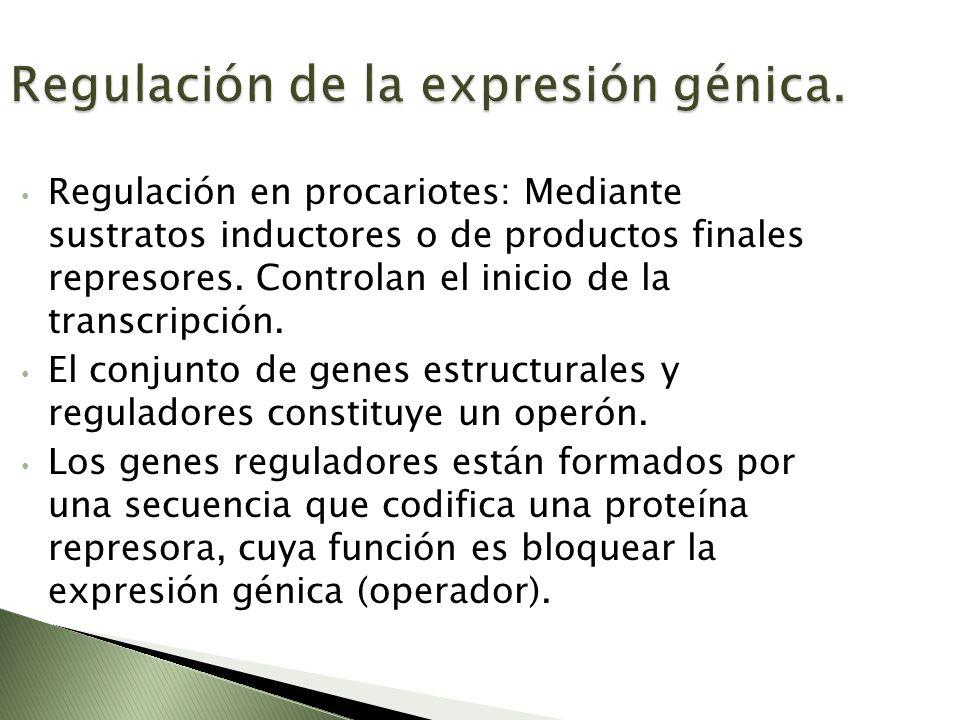 Regulación de la expresión génica.
