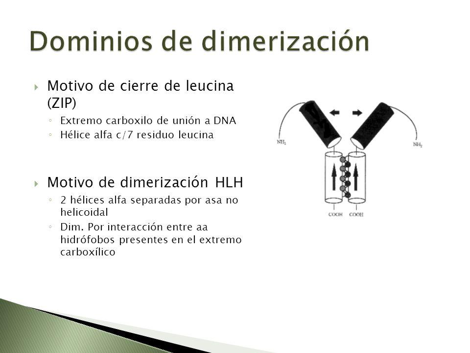 Dominios de dimerización