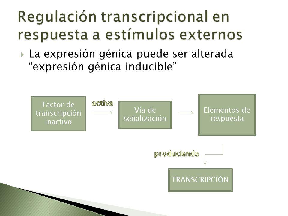 Regulación transcripcional en respuesta a estímulos externos