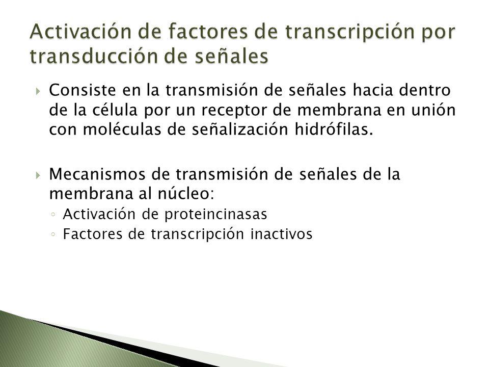 Activación de factores de transcripción por transducción de señales