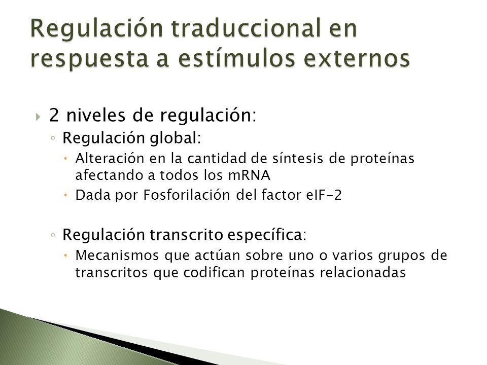 Regulación traduccional en respuesta a estímulos externos