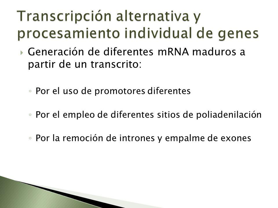 Transcripción alternativa y procesamiento individual de genes