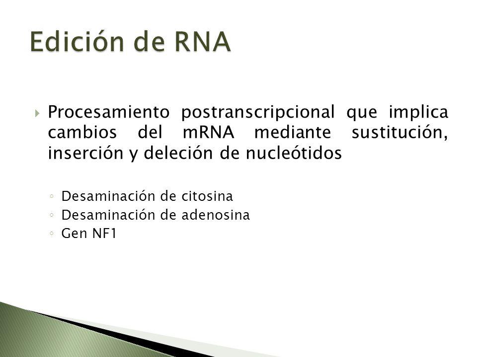 Edición de RNA Procesamiento postranscripcional que implica cambios del mRNA mediante sustitución, inserción y deleción de nucleótidos.