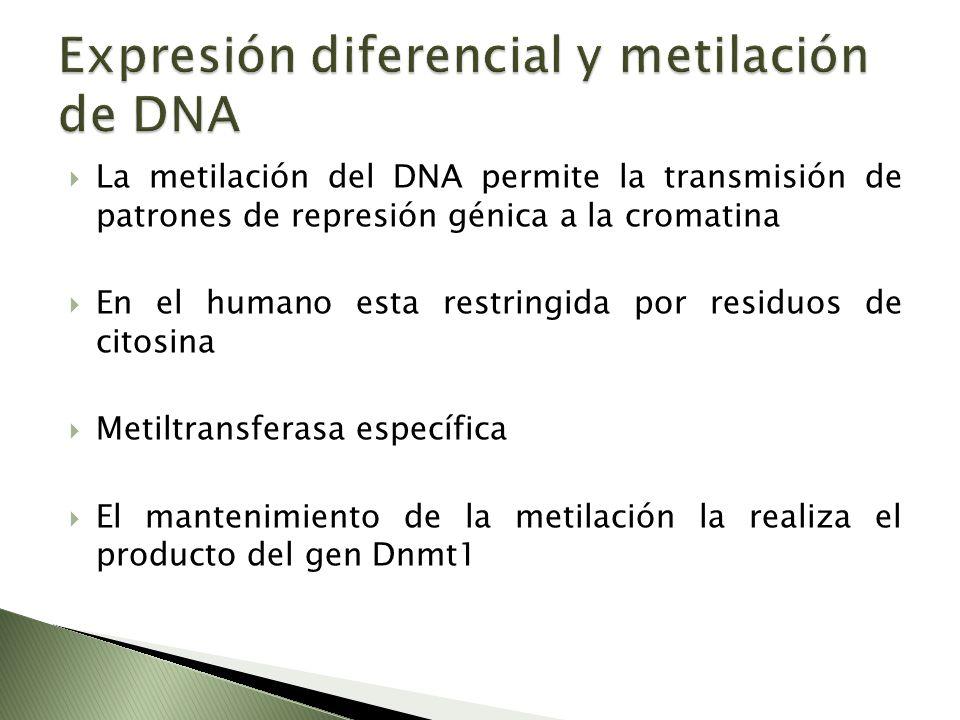 Expresión diferencial y metilación de DNA