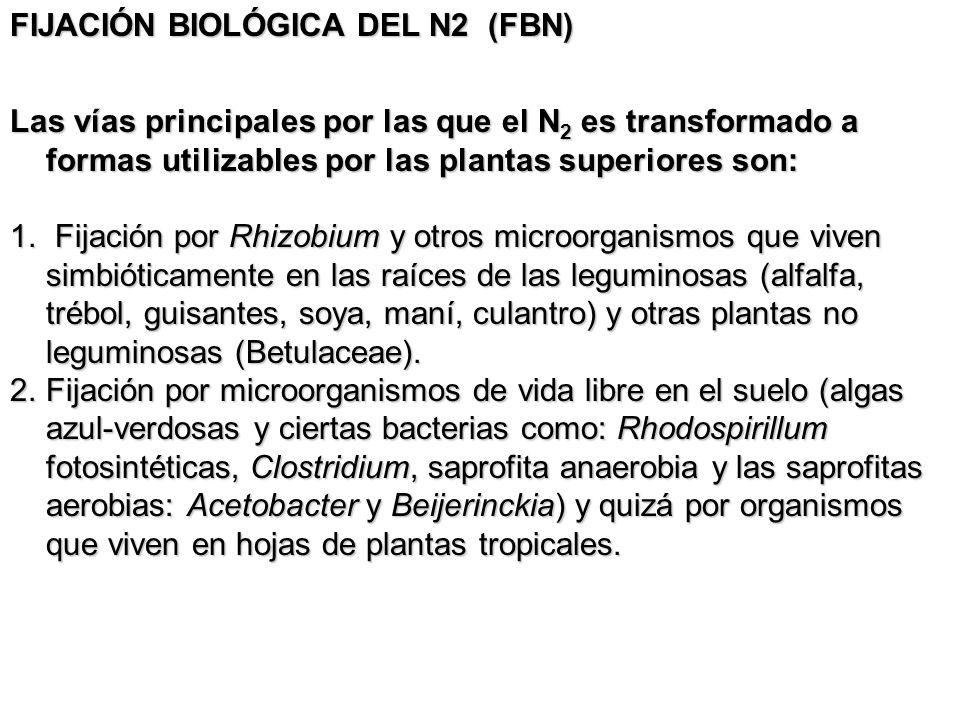 FIJACIÓN BIOLÓGICA DEL N2 (FBN)