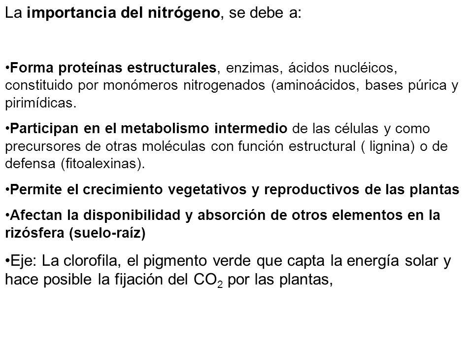 La importancia del nitrógeno, se debe a: