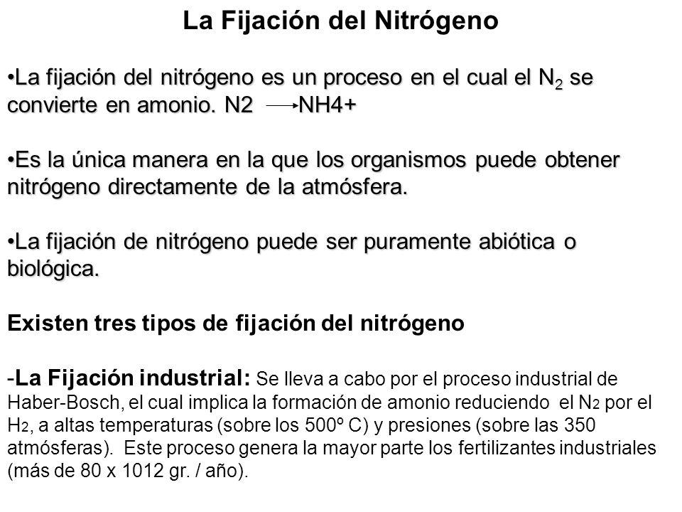 La Fijación del Nitrógeno