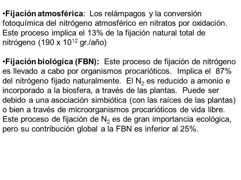 Fijación atmosférica: Los relámpagos y la conversión fotoquímica del nitrógeno atmosférico en nitratos por oxidación. Este proceso implica el 13% de la fijación natural total de nitrógeno (190 x 1012 gr./año)